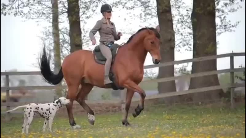 Greetje Arends Hakvoort and Bongo