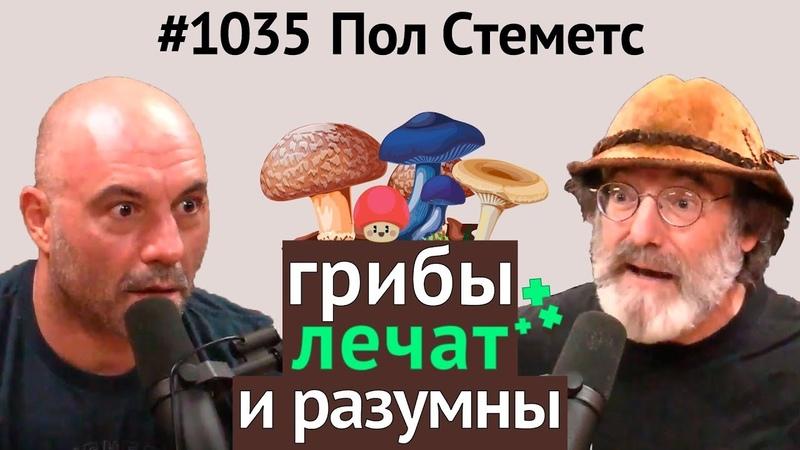 Джо Роган 1035 Пол Стеметс - о пользе грибов, мистических свойствах, разумности, кордицепсе и др.