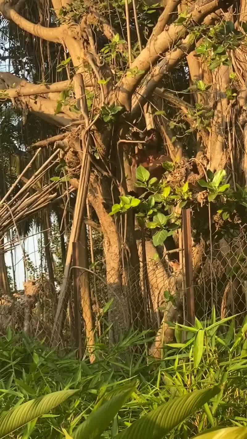 ›› Workouts (37): лазание по дереву