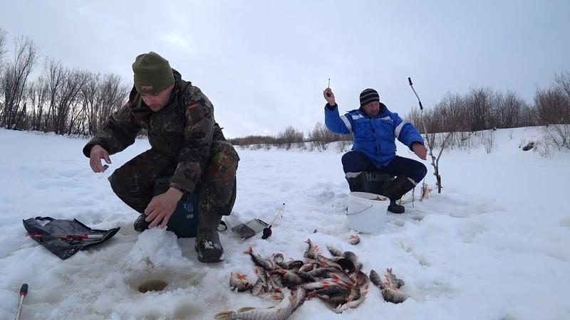 Нашли рыбу. Окуни и щуки с одной лунки лезут и лезут Рыбалка на севере.
