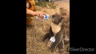 Спасение животных от пожара в Австралии... Rescue animals from a fire in Australia ..