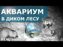 Аквариум в лесу - ЗВЕРИ в ШОКЕ / Aquarium in the forest - animals in SHOCK / REAL animals