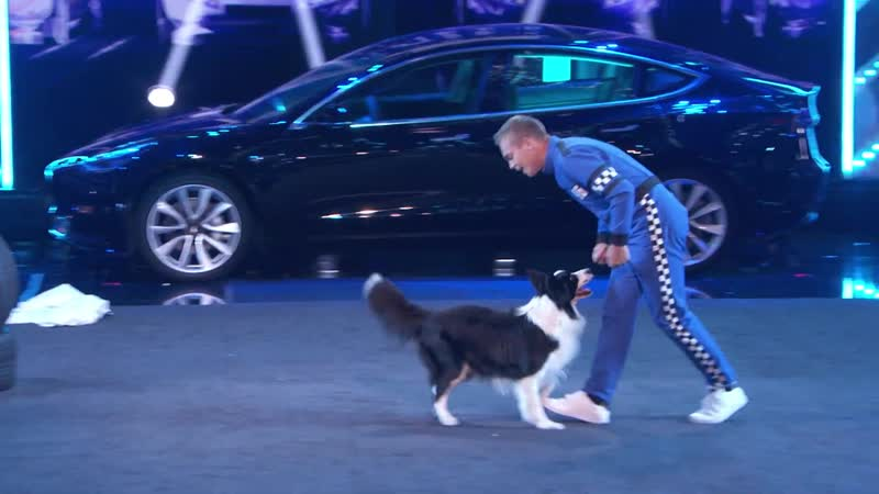 Lukas u0026 Falco Delivers Some Of The CUTEST And AMAZING Dog Tricks On AGT! Americas Got Talent