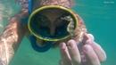 Черное море - black sea Сrab, Medusa, Rapana,Hippocampus guttulatus,Tursiops truncates ponticus.