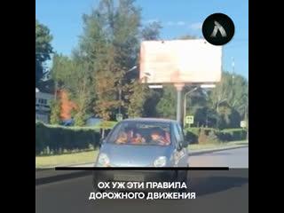 В Ростове женщина не справилась с управлением машиной | АКУЛА