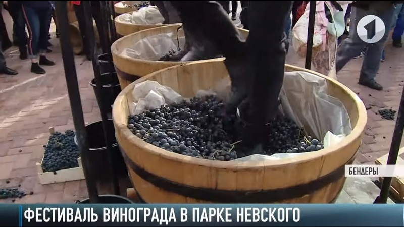 «Укрощение строптивого» на празднике винограда