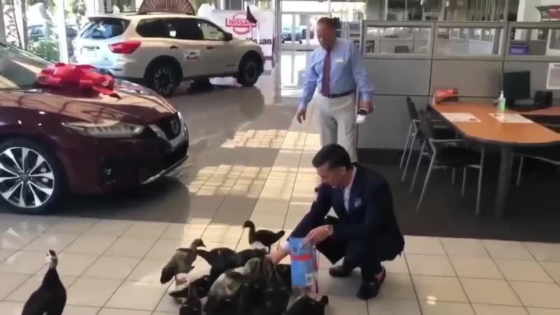 Утки любят ходить в автосалон Nissan enrb k zn jlbnm d fdnjcfkjy nissan enrb k zn jlbnm d fdnjcfkjy nissan enrb k zn jlbnm