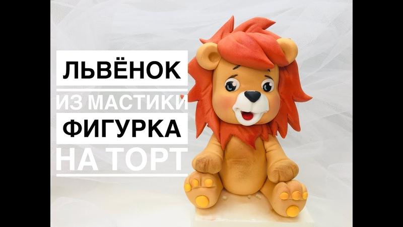 Львёнок_young lion_Leão