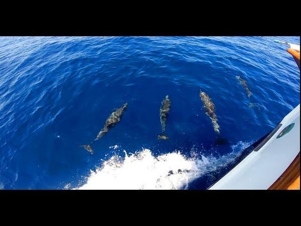 Дельфины Майорка Delfines Mallorca