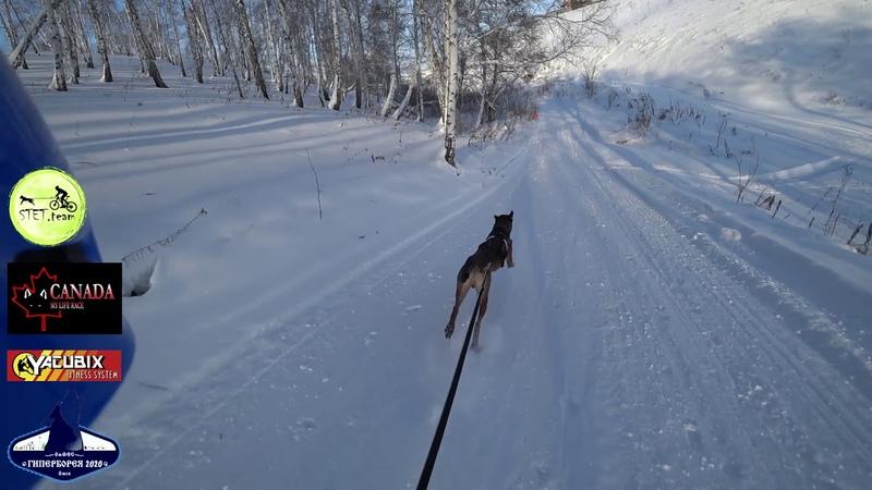 скиджоринг 1 собака Гиперборея 2020 Мали Флайт Штит