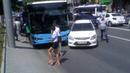Accidente lîngă MAI cu autobuz de rută şi 4 răniţi - Curaj