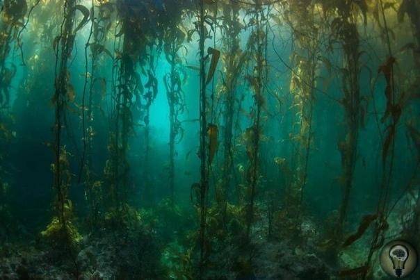 На Земле найдено место, которое не пострадало от рук человека Читая новости про то, как океаны превратились в «урны» для пластикового мусора, можно подумать, что человечество навредило каждому