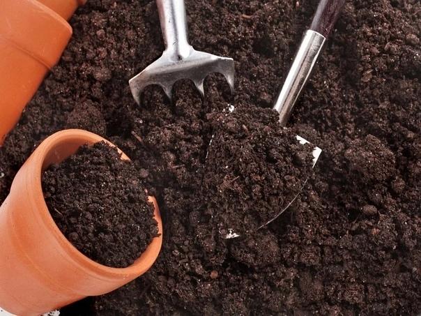 почвогрунт для рассады: купить или сделать самостоятельно «готовь сани летом», - так, кажется, звучит народная мудрость за хлопотами в огороде и подготовкой растений к зимовке не забудьте одно