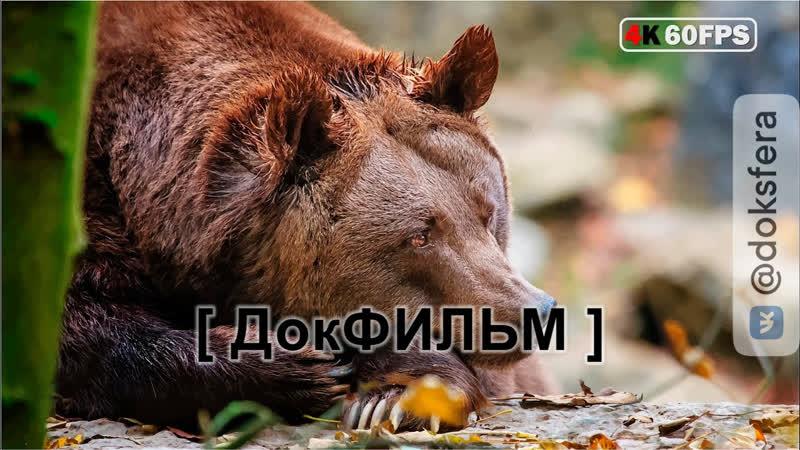Дикая природа России Wildlife in Russia National Geographic ДокСФЕРА