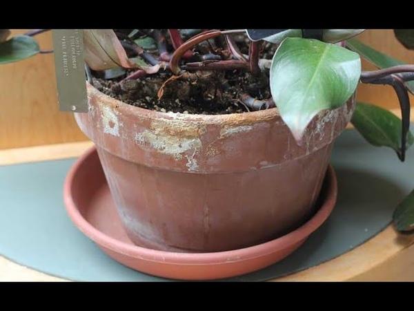 Полезное видео с канала на ютубе Елена Шилова про орхидеи для друзей Чистка глиняных горшков