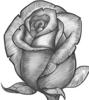 drawings of flowers - 736×830