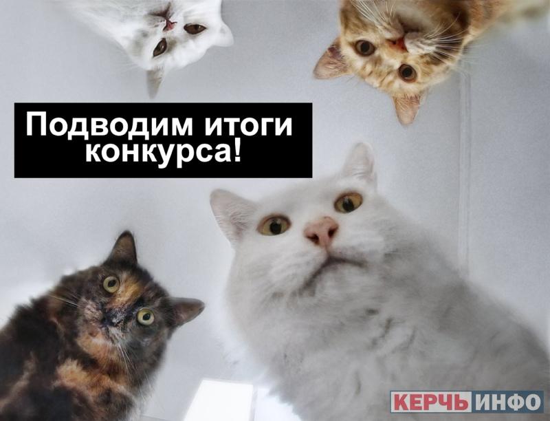 Подводим итоги конкурса призов ко Дню кошек