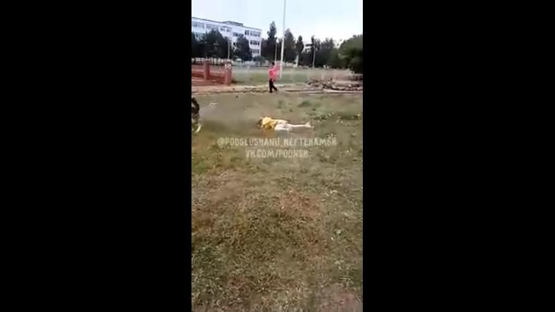Не бойся он просто играется В башкирском городе Агидель псина напала на маленькую девочку Больше всего удивляет реакция оче