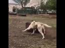 Жили-были конь да пес.