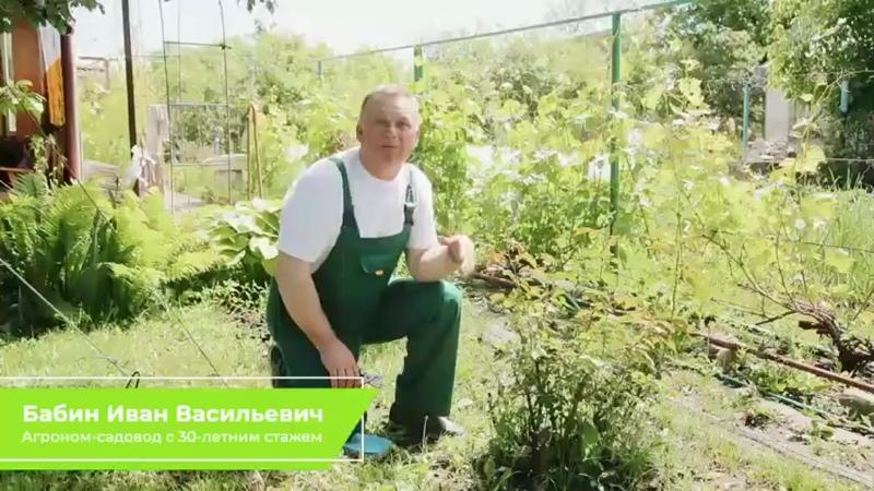 СПОСОБЫ БОРЬБЫ С ТЛЕЙ В ИЮНЕ - Школа цветоводства и садоводства