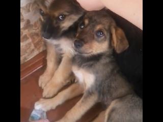 Видео от Борисов. Животные в беде! Поможем вместе!