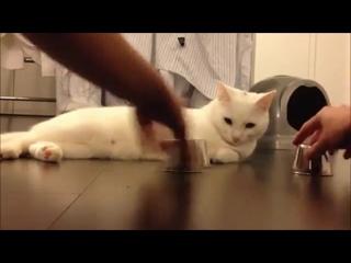 Кручу-верчу, кота запутать хочу!