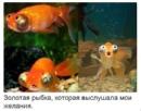 Фотоальбом Said Dzodzin