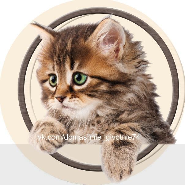 Домашние животные Челябинска | паблик