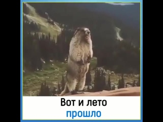 Vladimir Şuloyakovtan video