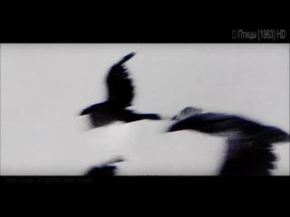 Ужасы - Птицы / The Birds (1963) HD