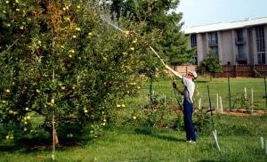 Как бороться с вредителями на домашних растениях?