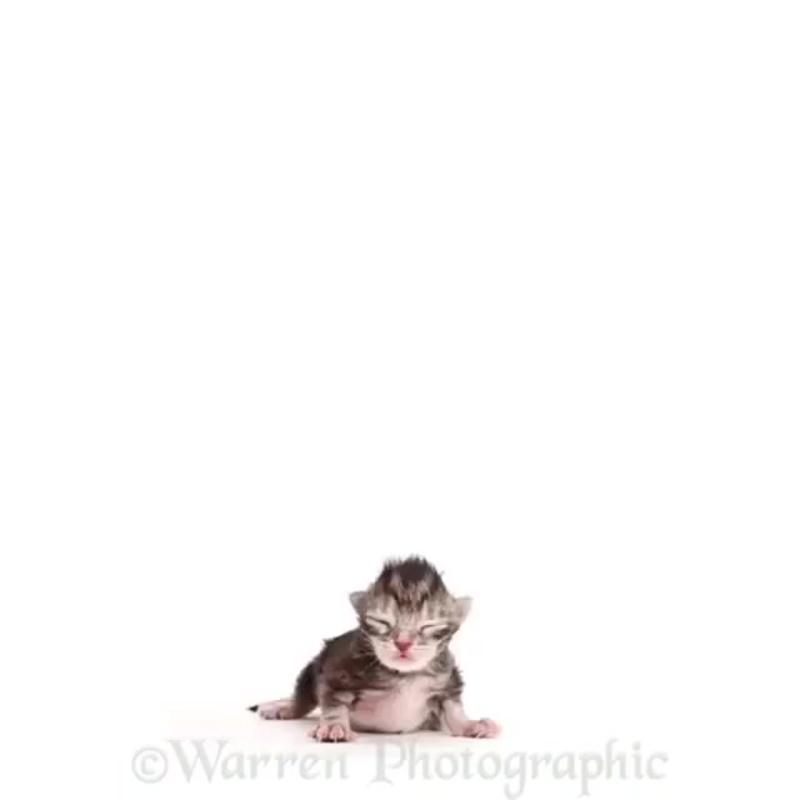 video.pets_B2Ovp6rHXQn.mp4