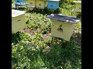 ты пчела, я пчеловод а мы любим мёд.
