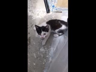 Video by Ekaterina Bulitcheva