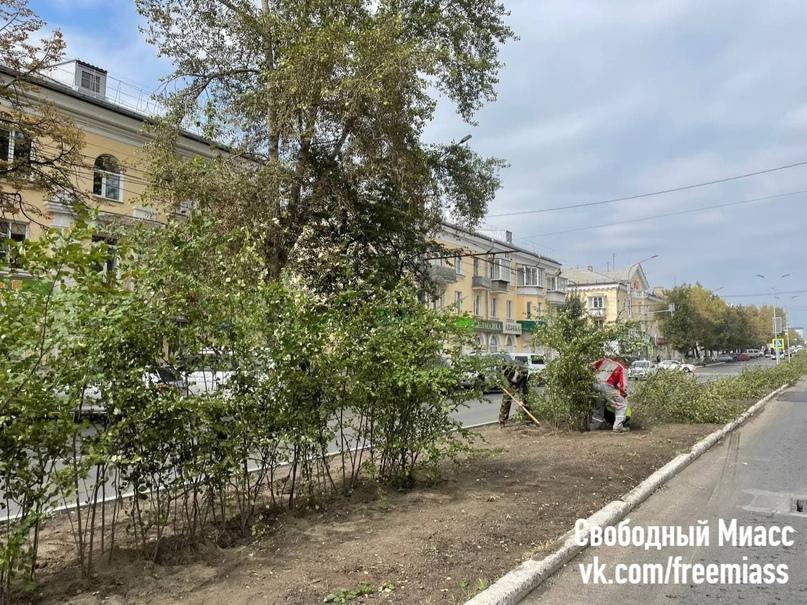 Сегодня продолжились работы по высадке кустов на разделительной полосе по проспекту Автозаводцев