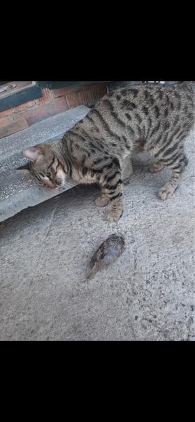 Пропала кошка!😣Выскочила из машины, перед этим опу...