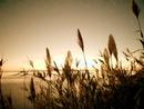 Мон Нил фотография #30