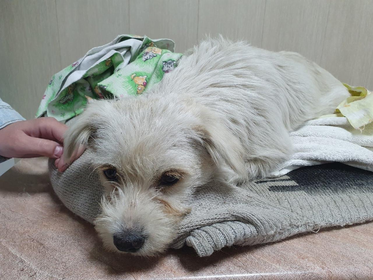 Молодые люди обнаружили Ромашку на обочине дороги. Собака долгое время не встава...