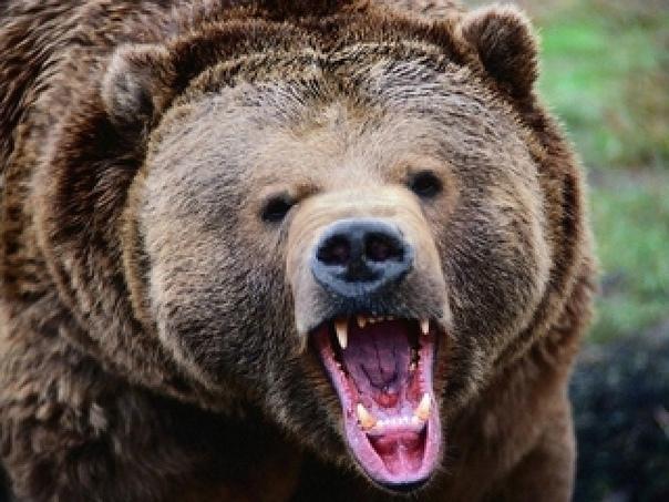 В лесу под Раздольным медведь напал на мужчинуПод ...