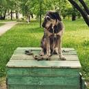 Юрий Синодов фотография #19