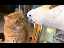 Говорящий попугай решил поговорить с котом home zoo. ПРИКОЛЫ С ЖИВОТНЫМИ 😺🐶 Cute Parrots