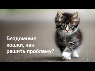 Бездомные кошки. Как решить проблему?