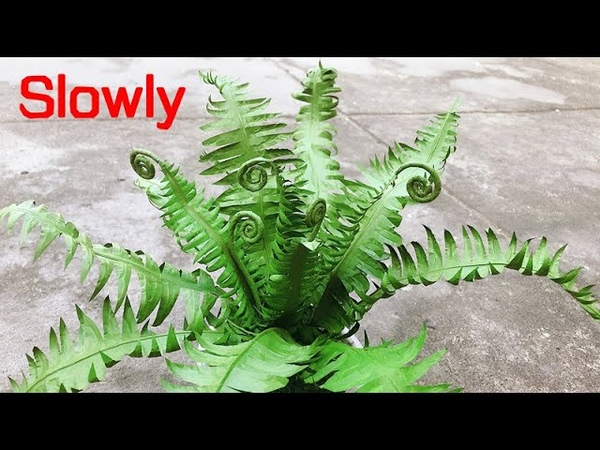 ABC TV How To Make Paper Tree Fern Slowly Craft Tutorial