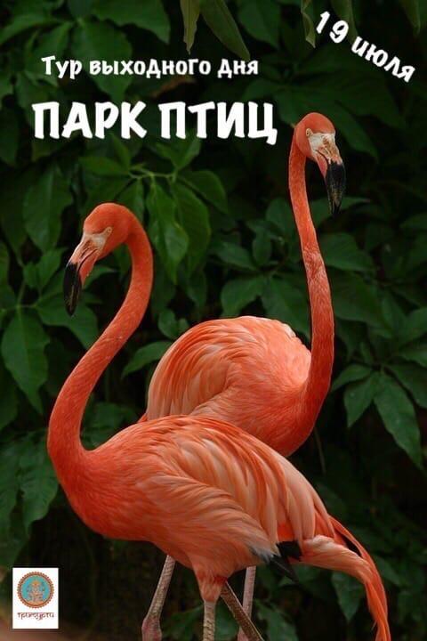 Афиша Калуга 19.07.ПАРК ПТИЦТур выходного дня