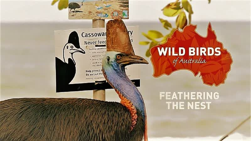 Дикие птицы Австралии Родное гнездо