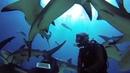 GoPro: Nassau Bahamas Shark Dive with Stuart Cove's 720p