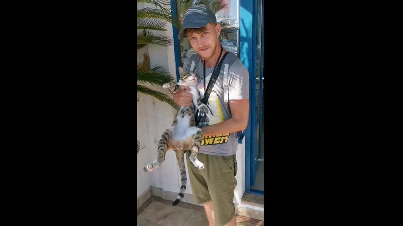 Матрица лагает Montenegro 2019 Смешное видео Lol Милота Cat