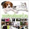 Собаки, кошки, животные, природа