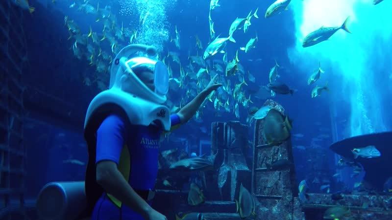 ОАЭ Дубай отель Atlantis The Palm 5