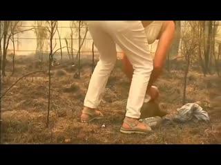 В австралии женщина остановила машину посреди горящего леса и побежала спасать коалу, которая буквально сгорала заживо без шансо